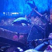 Birch Aquarium 030