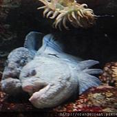 Birch Aquarium 033