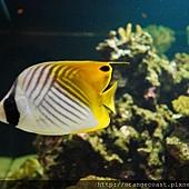 Birch Aquarium 064