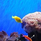 Birch Aquarium 054