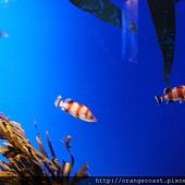 Birch Aquarium 047