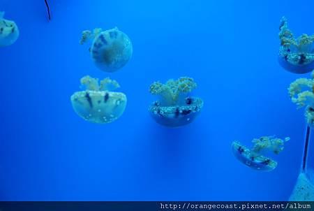 Birch Aquarium 043