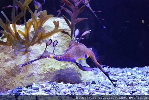 Birch Aquarium 066