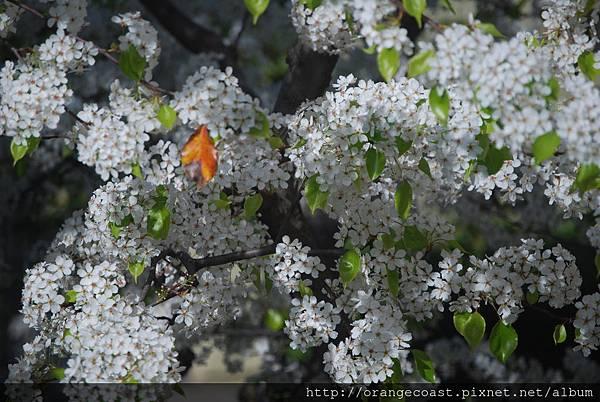 Flower 073
