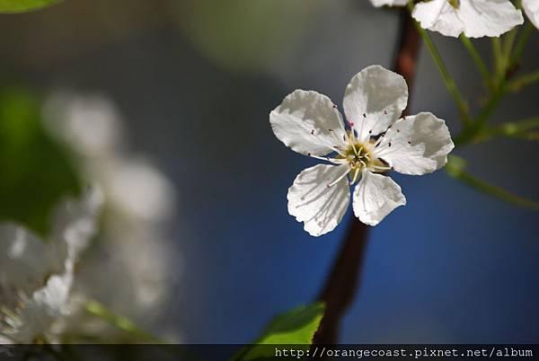 Flower 066