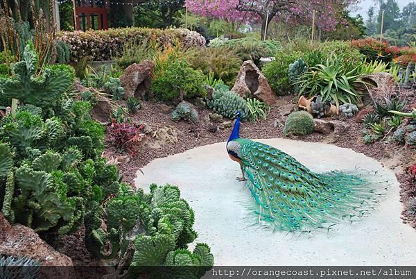 LA Arboretum 095