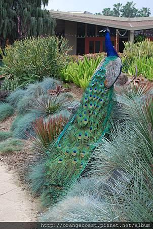 LA Arboretum 080