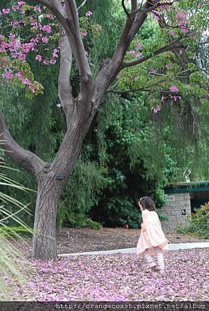 LA Arboretum 268