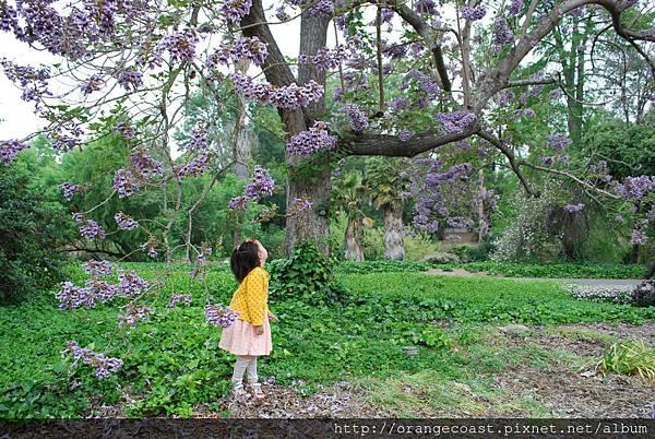 LA Arboretum 201