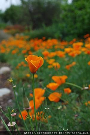 LA Arboretum 182