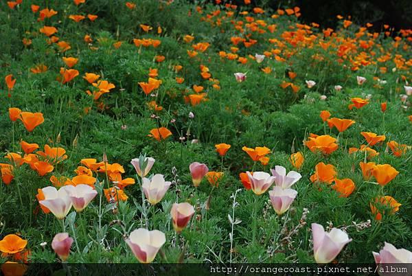LA Arboretum 183
