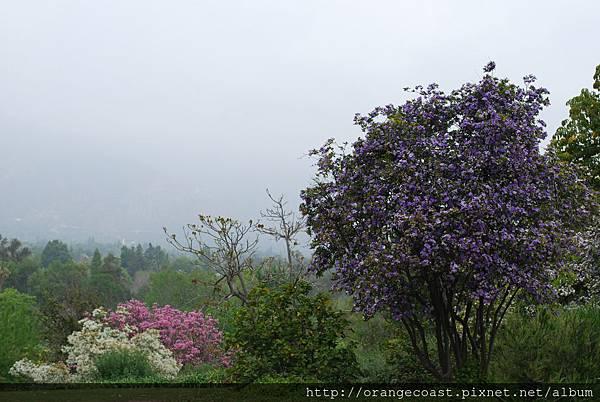 LA Arboretum 170