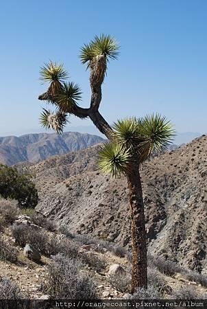 Palm Springs 371