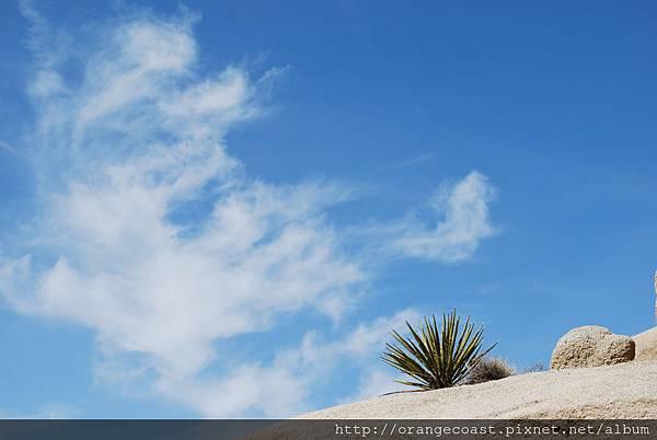 Palm Springs 558