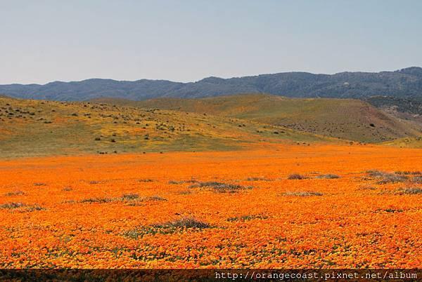 Antelope Valley 2014-04-20 067-1