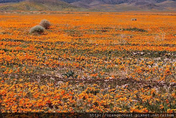 Antelope Valley 2014-04-20 044