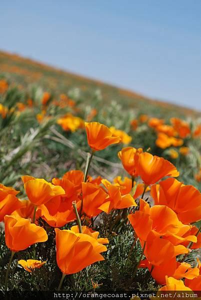Antelope Valley 2014-04-20 102