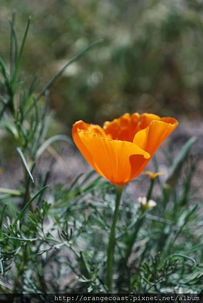 Antelope Valley 2014-04-20 177