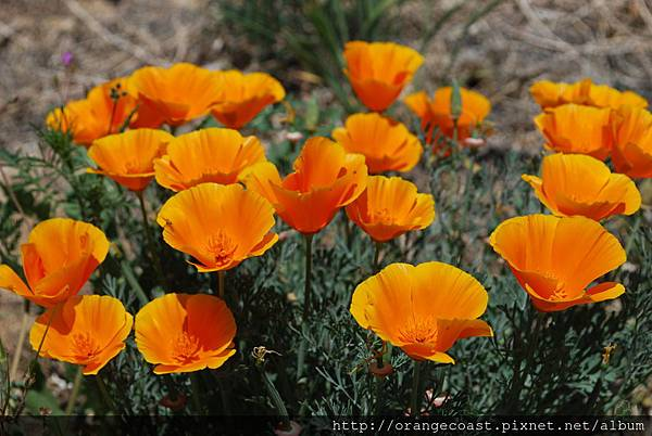 Antelope Valley 2014-04-20 077