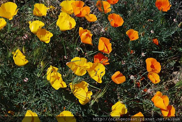 Antelope Valley 2014-04-20 301
