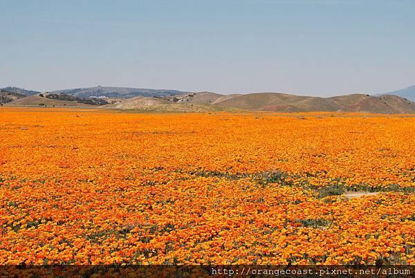 Antelope Valley 2014-04-20 069