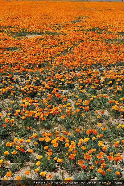 Antelope Valley 2014-04-20 066