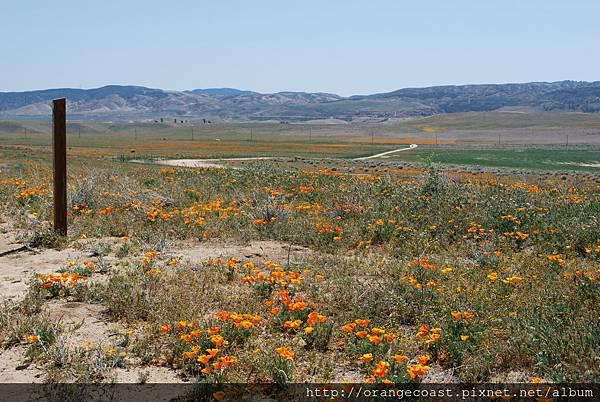 Antelope Valley 2014-04-20 248