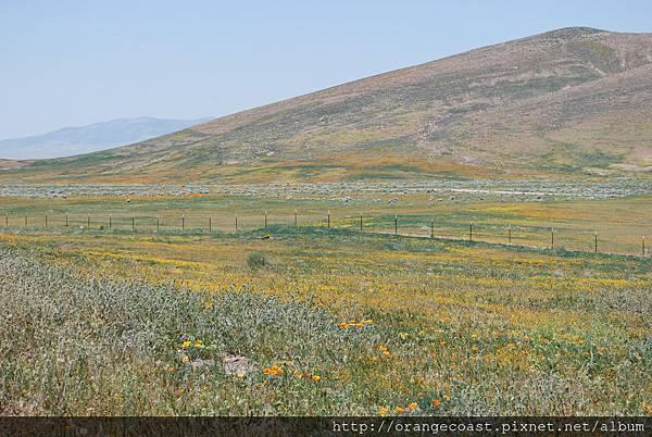 Antelope Valley 2014-04-20 163
