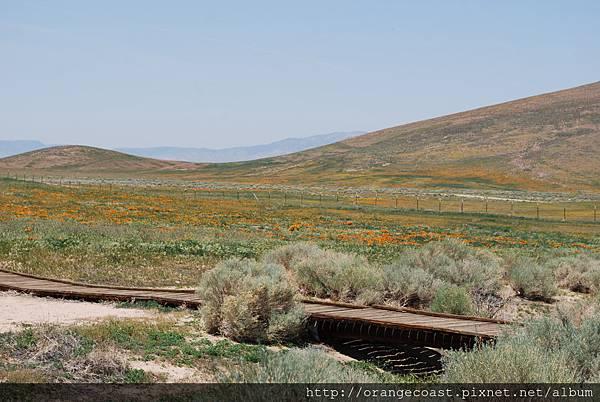 Antelope Valley 2014-04-20 153