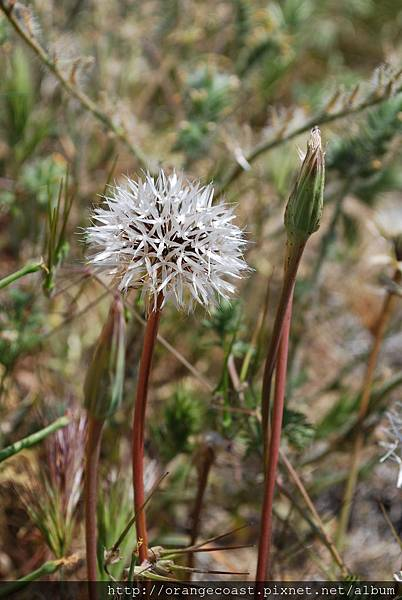 Antelope Valley 2014-04-20 090