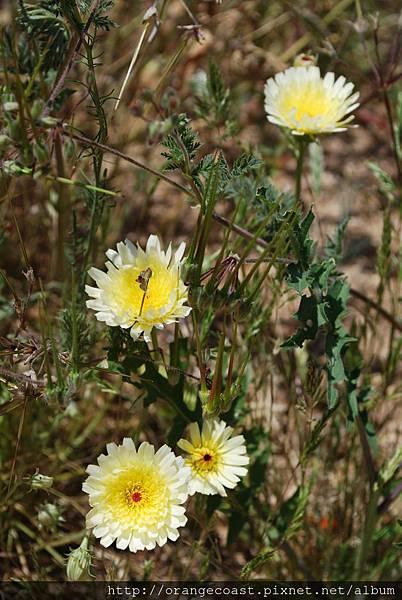 Antelope Valley 2014-04-20 082