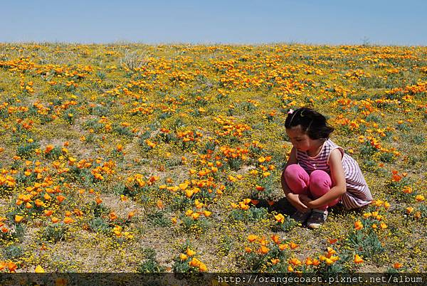 Antelope Valley 2014-04-20 350