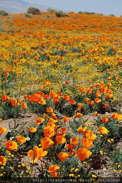 Antelope Valley 2014-04-20 361