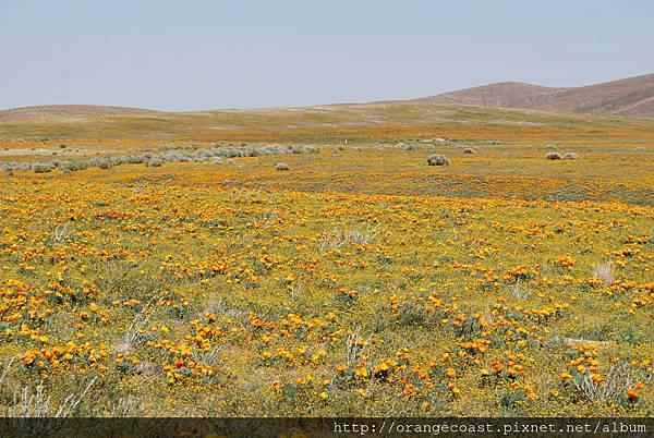 Antelope Valley 2014-04-20 375
