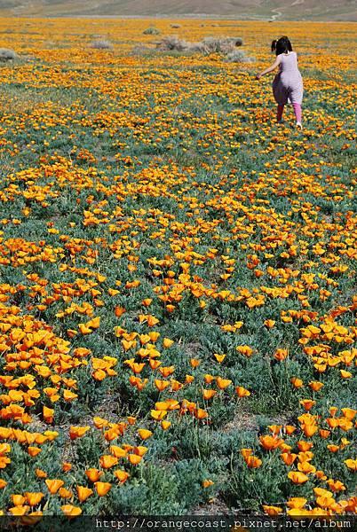 Antelope Valley 2014-04-20 440