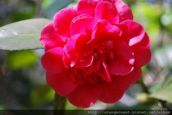 Descanso Gardens 028