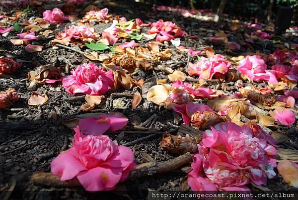 Descanso Gardens 125