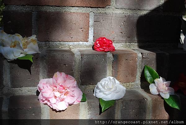 Descanso Gardens 005
