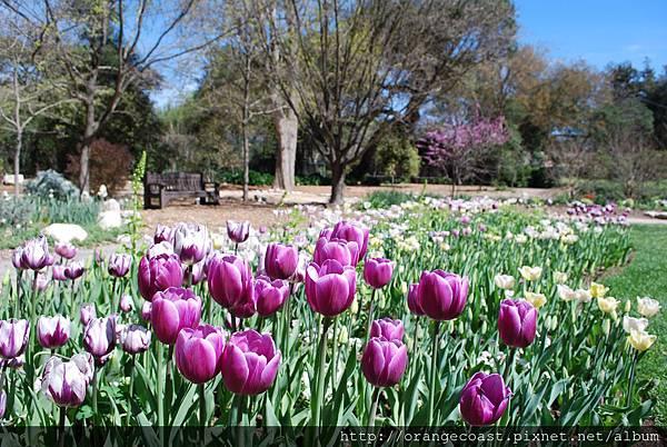 Descanso Gardens 161