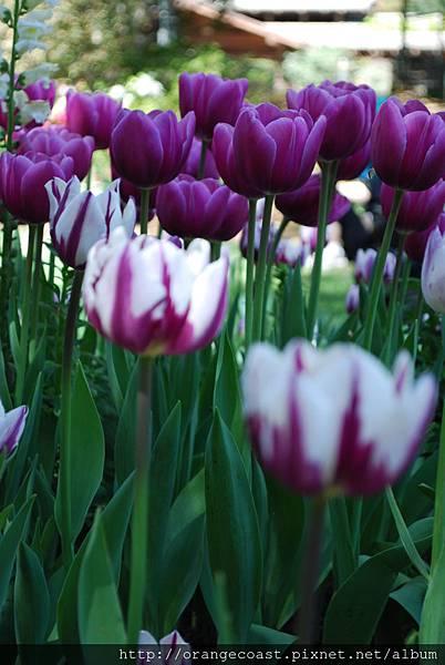 Descanso Gardens 181