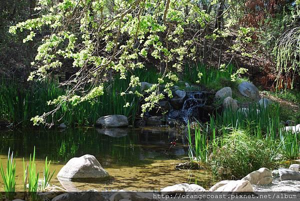 Descanso Gardens 218