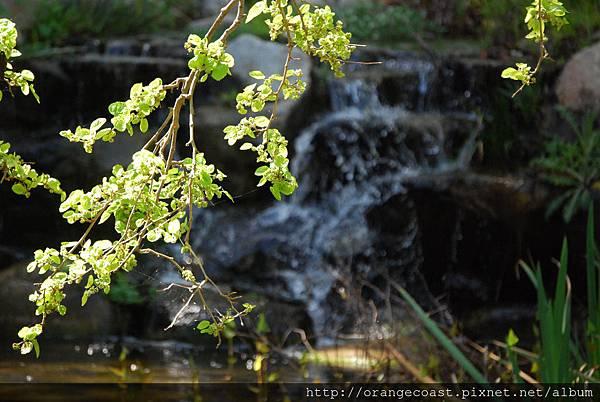 Descanso Gardens 221