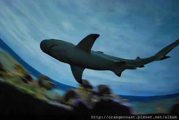 Sea World 2014-09-20 225