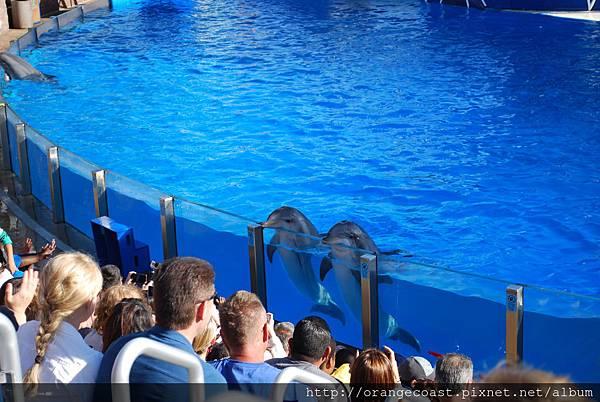 Sea World 2014-11-23 085