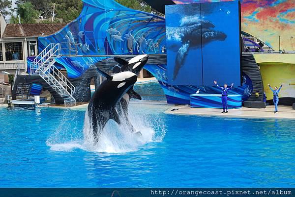 Sea World 2014-09-20 066