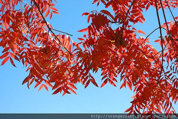 Oak Glen 2015-11-22 015