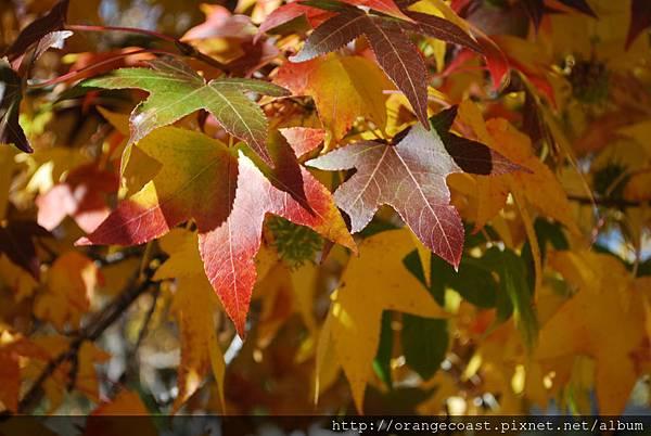 Oak Glen 2015-11-22 006