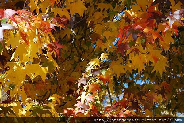 Oak Glen 2015-11-22 005
