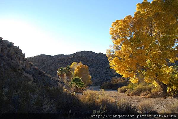 Joshua Tree 2015-11-23 154