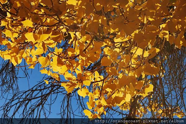 Joshua Tree 2015-11-23 162